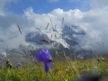 005_flower2_at_kleine_scheidegg