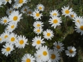 069_some_flowers