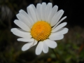 071_another_flower