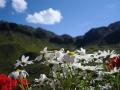 small-007_flowers_at_kemptner_hut